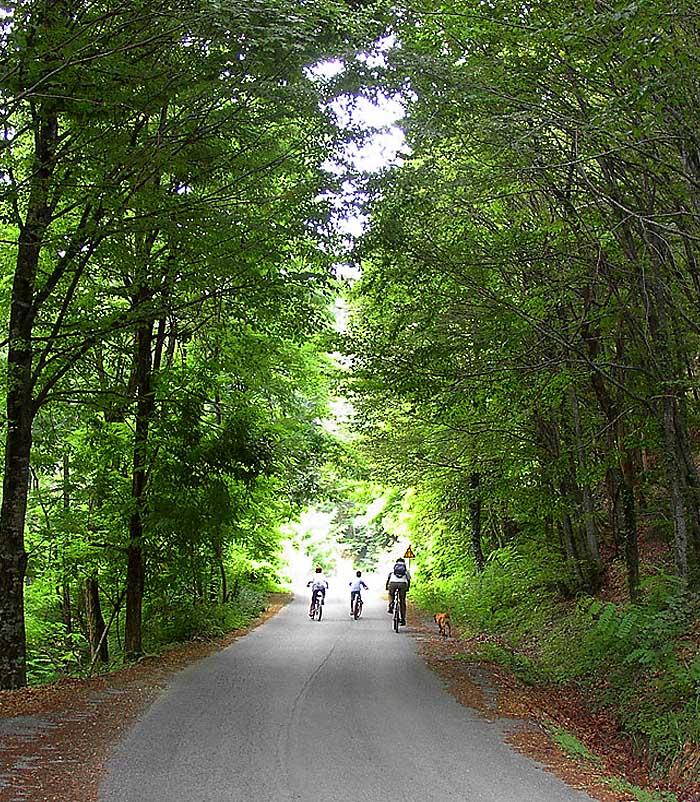 Ποδηλασία / Cycling